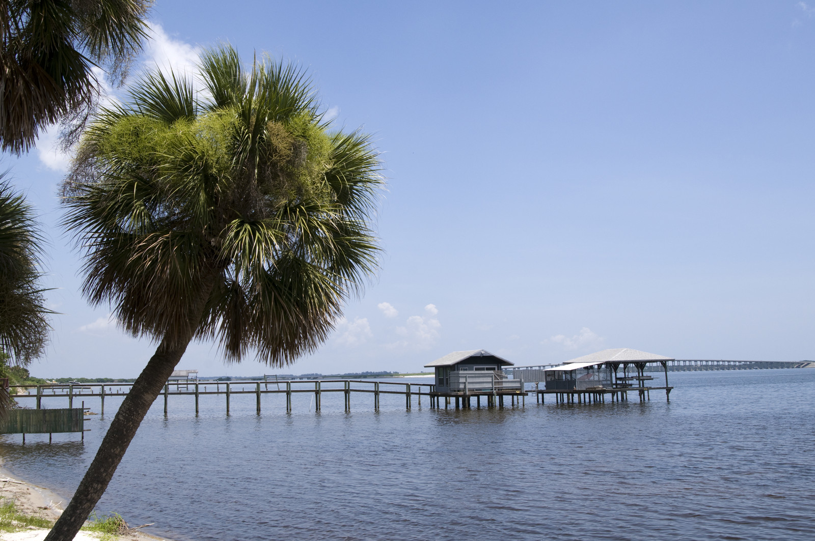 Lagoon area of Melbourne, FL with a small pier and palm trees hanging over the water