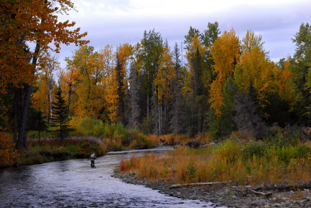Beautiful trees line a river in Alaska where a man is fishing.