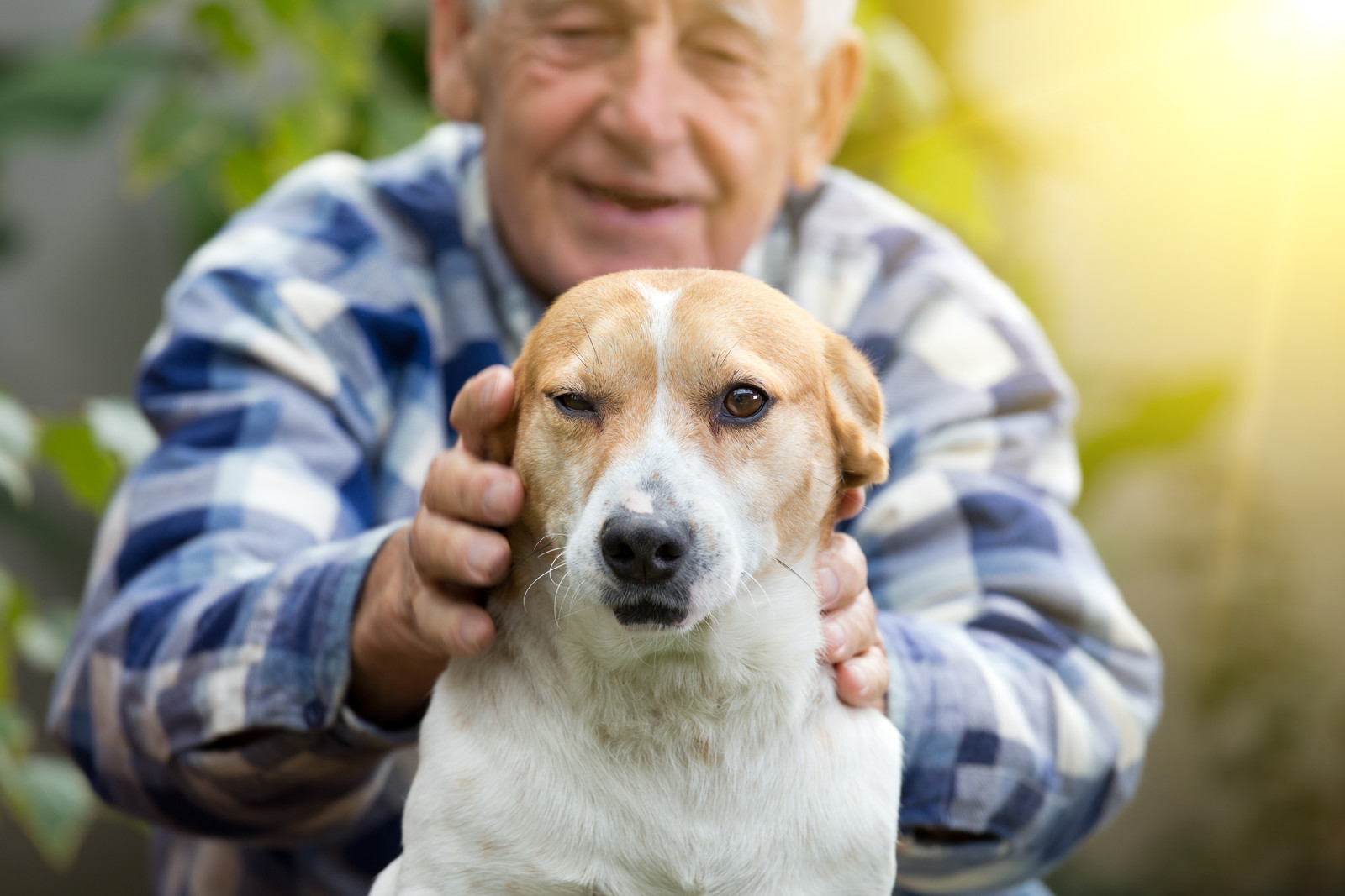 Senior man sitting outside petting a  brown and white dog in front of him
