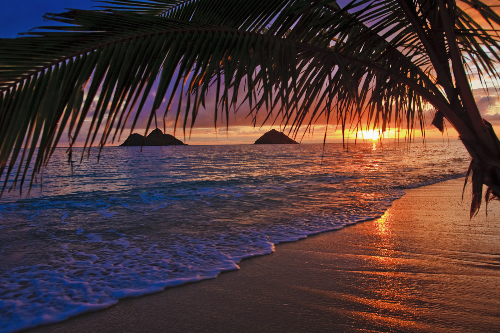 Sunrise on a Hawaiian beach showing palm trees and waves