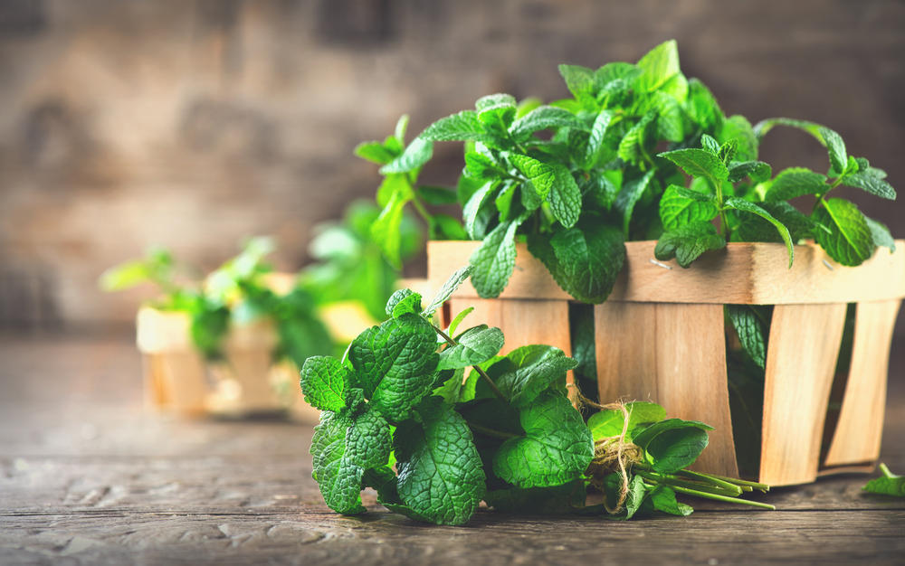 Peppermint leaves in a carton