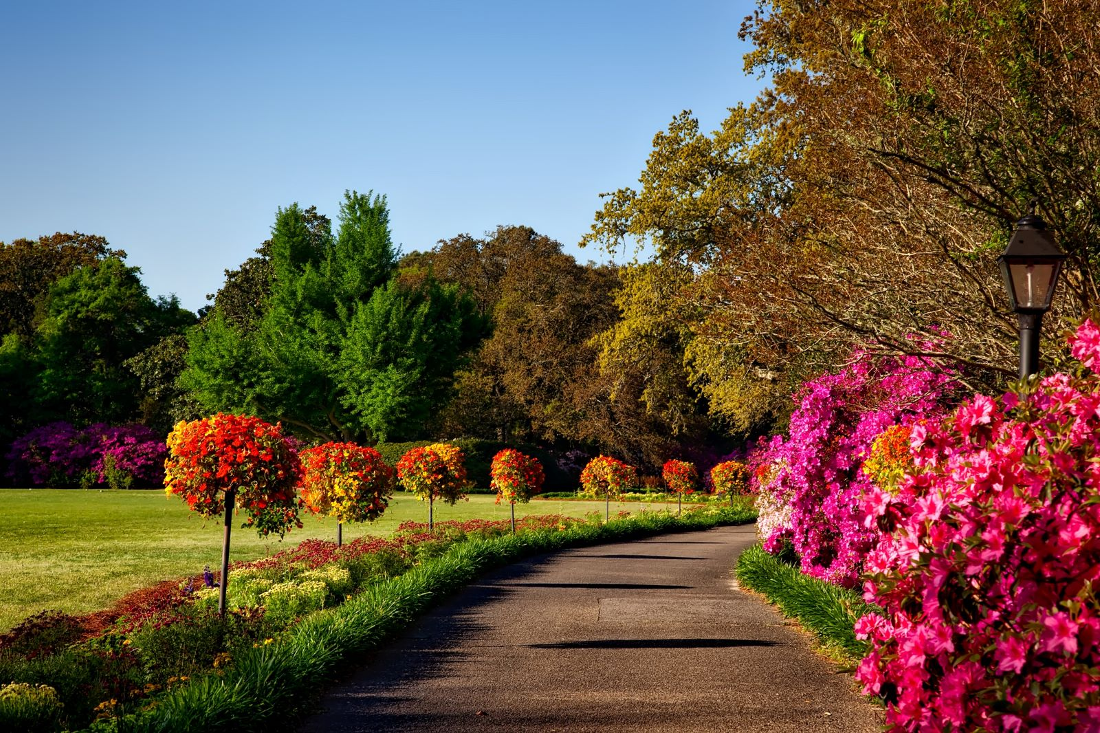 Best Places to Retire in Alabama - Walking path framed by flowering pink shrubs on the right and small manicured flowering red and yellow trees on the left with short flower and greenery, blue sky and the back drop has green trees and more pink flowering bushes