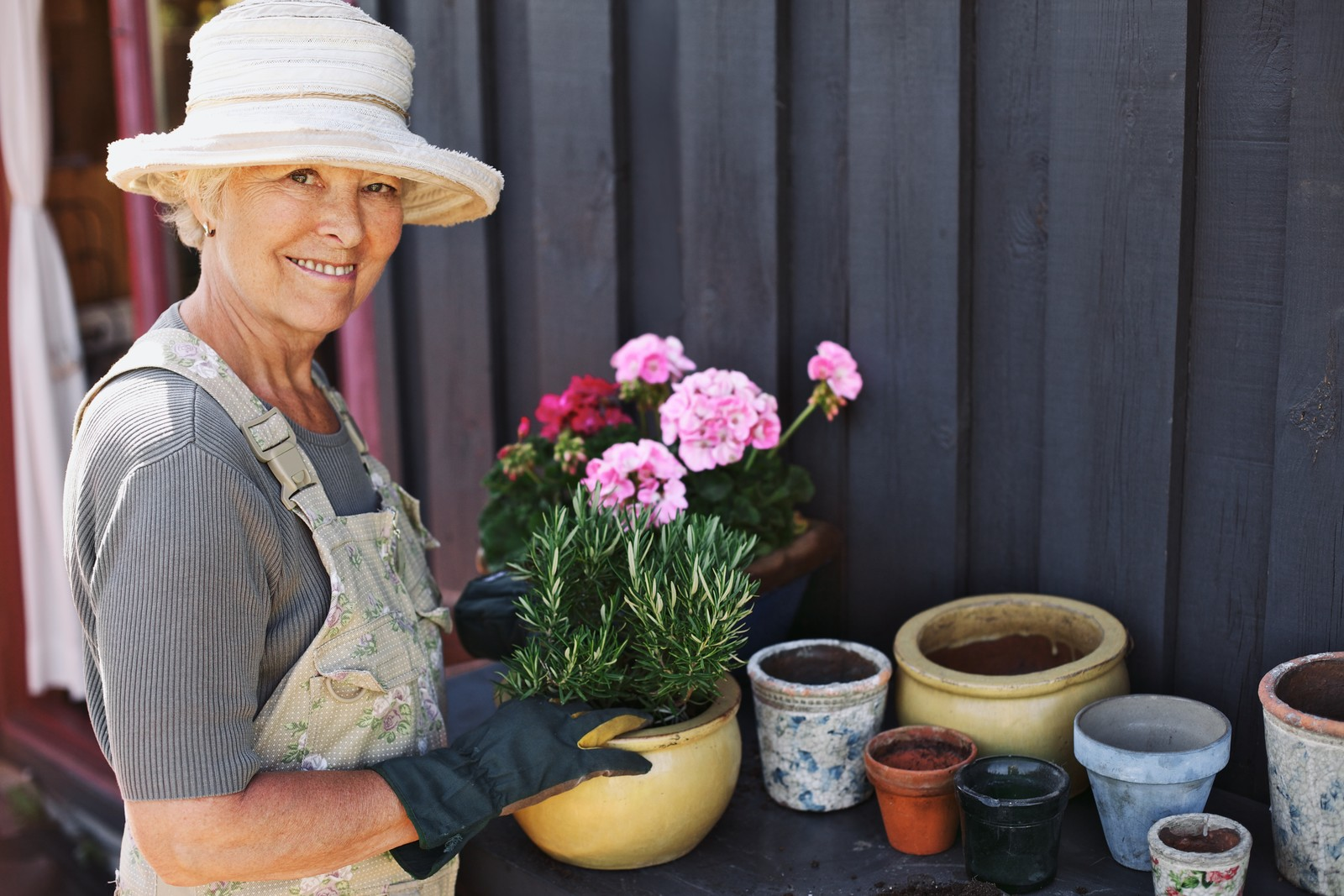 Senior woman with a sun hat and overalls on planting rosemary in a pot.  empty pots are scattered on the back of her worktable waiting to be planted.