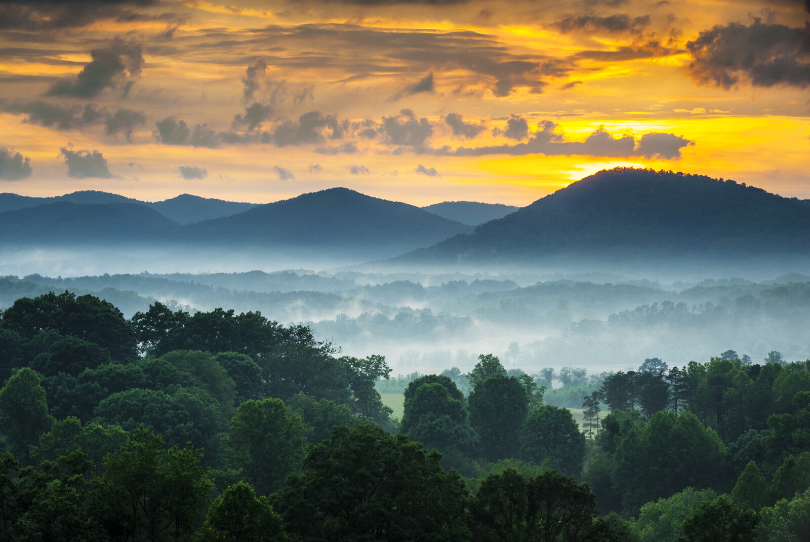 Asheville North Carolina Blue Ridge Mountains at Sunset with a Foggy Landscape and in the front green tree tops
