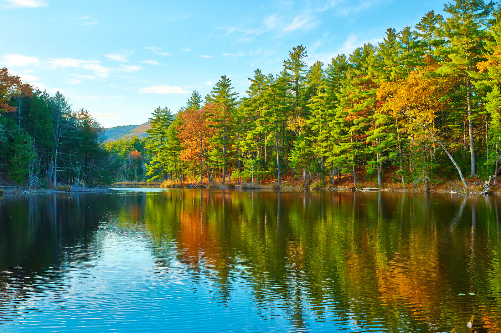 Best Places to Retire in New Hampshire-Pond in White Mountain National Forest, New Hampshire with colorful trees outlining the banks with blue skies