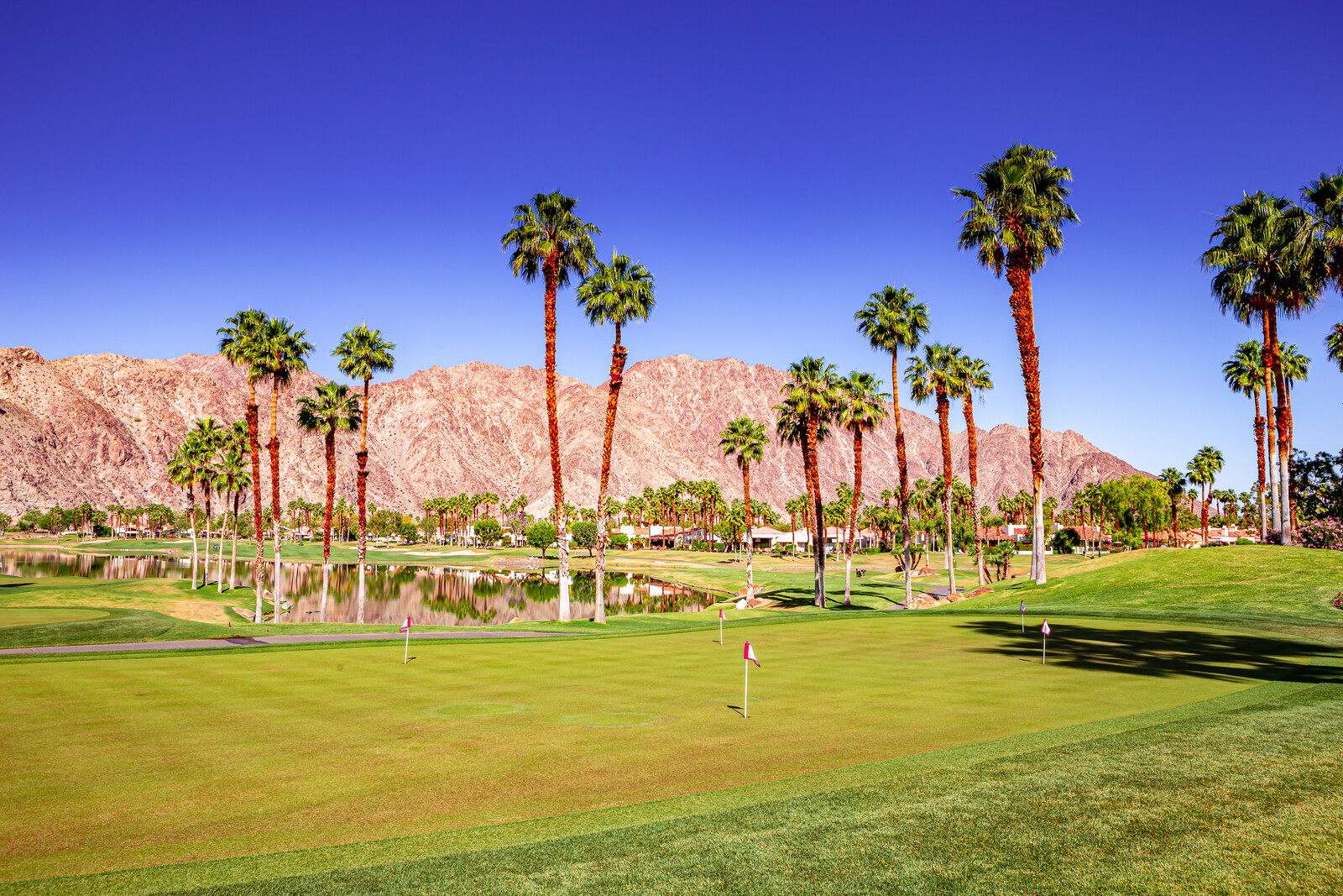 Exquisitely manicured golf course greens lined with palm trees, with clear blue skies