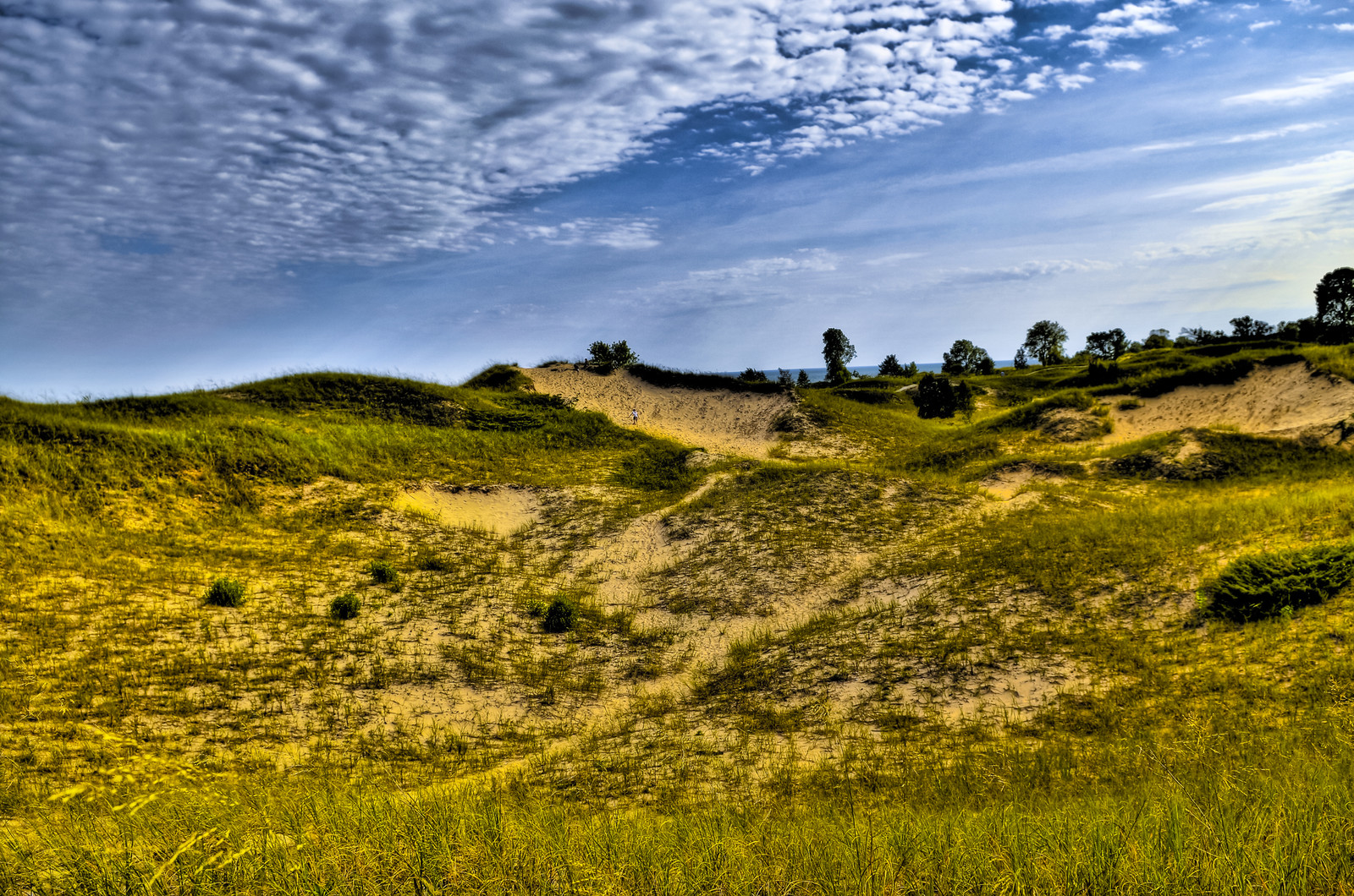 Sand dunes with blue skie overhead - photo from the juniper nature trail in kohler andrae state park - in Sheboygan Wisconsin