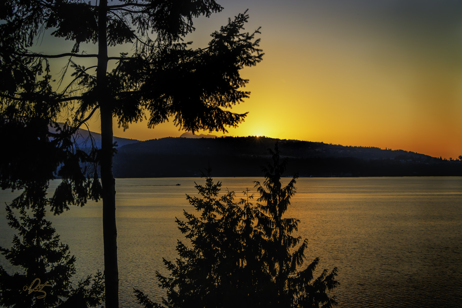 Golden Sunset at dusk over Sequim Bay with trees lining the shores