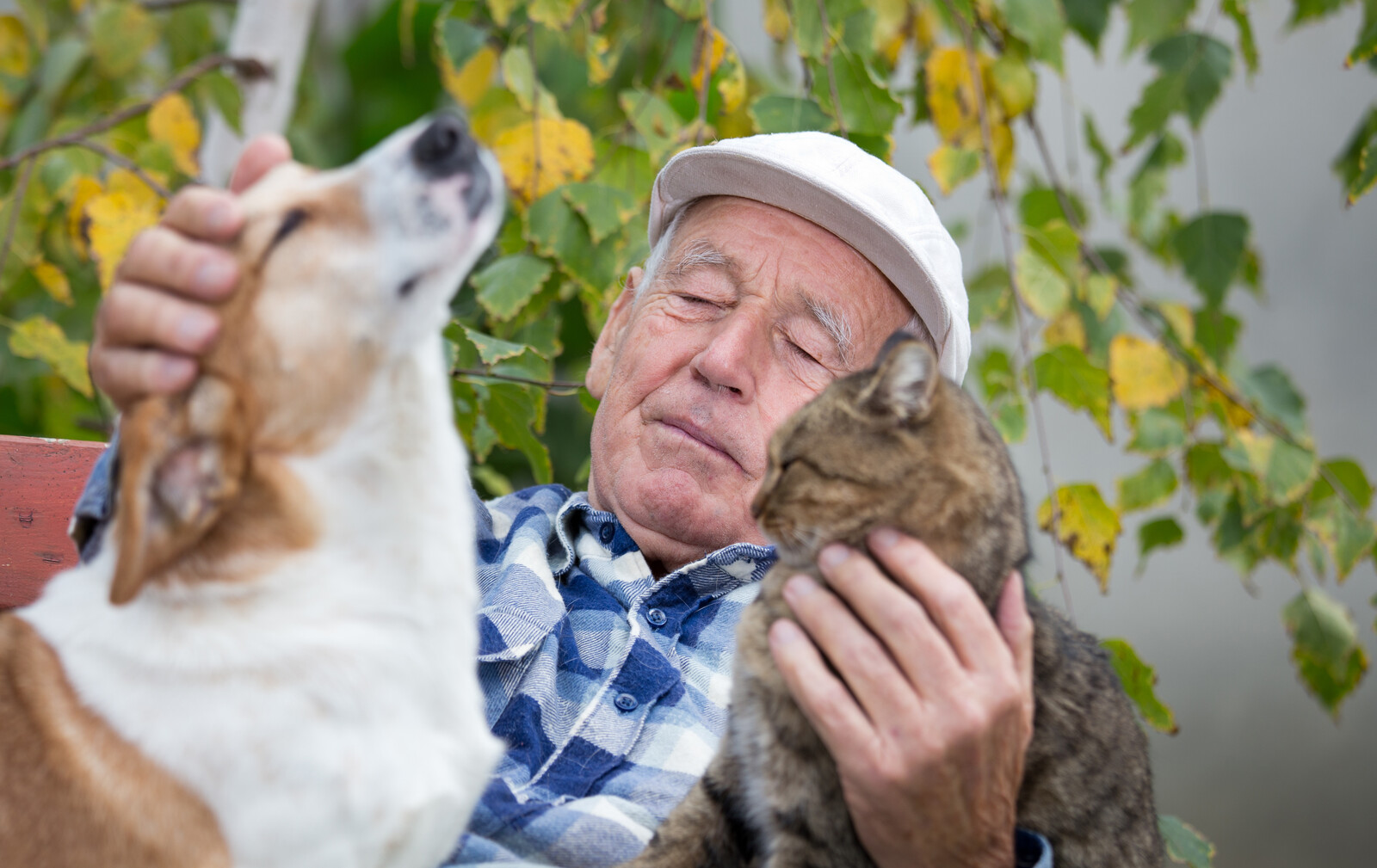 Senior man enjoying time with his cat and dog, cuddling them in and outdoor courtyard