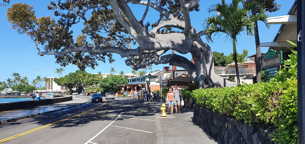 A couple walking down the street in Kailua Kona Hawaii with a large tree overhanging a road