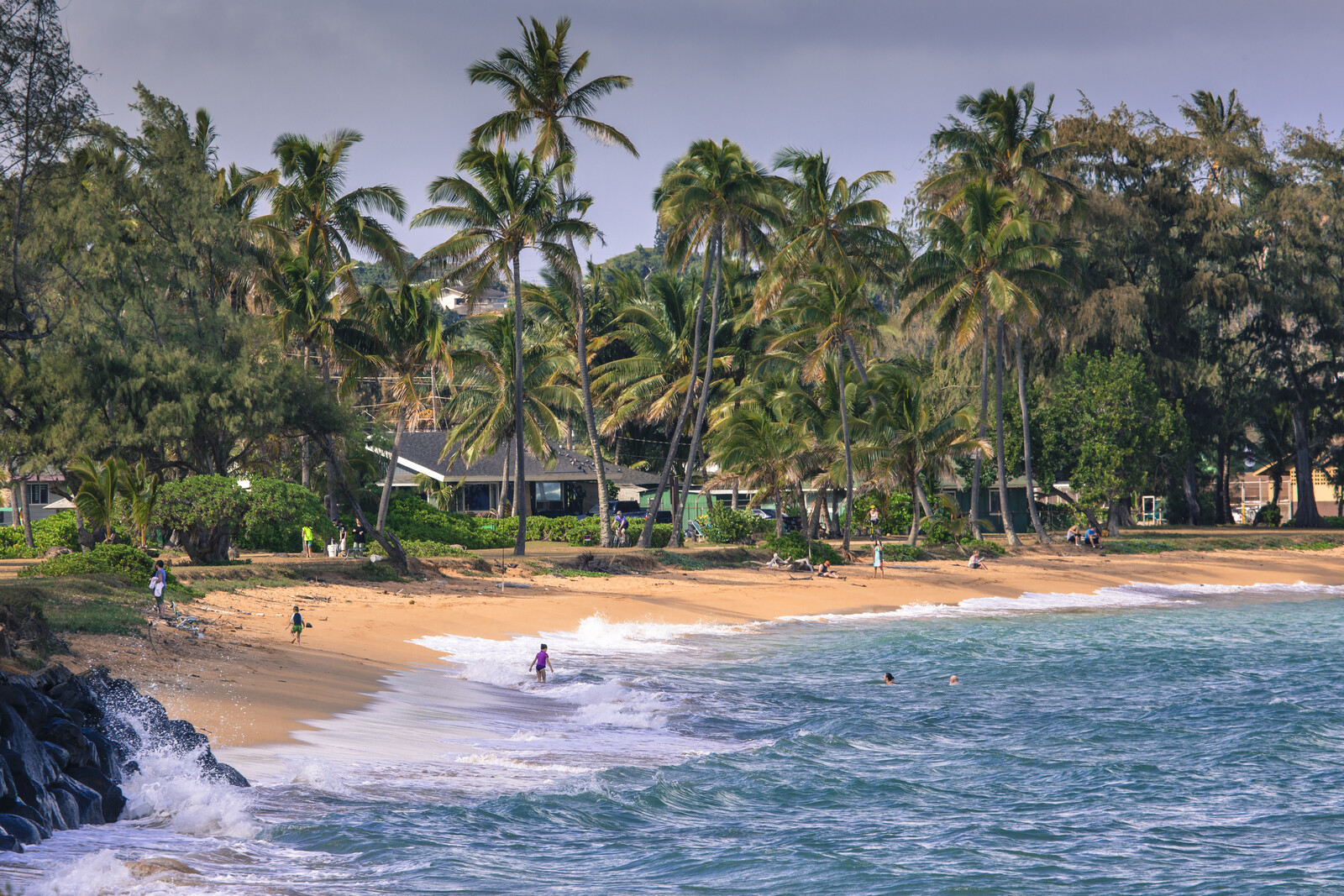 Palm trees along the beach with blue waters hitting the shoreline and houses tucked among the trees