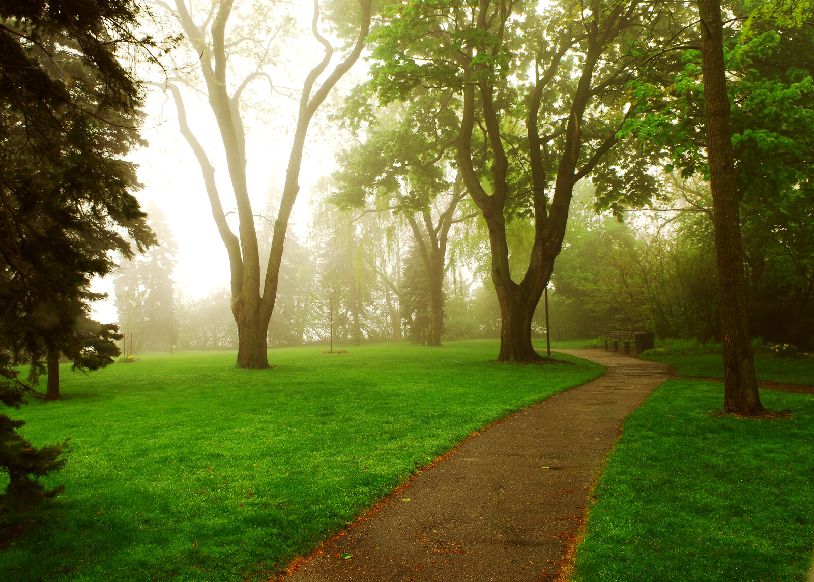 Foggy morning in a park with mature trees and green grass