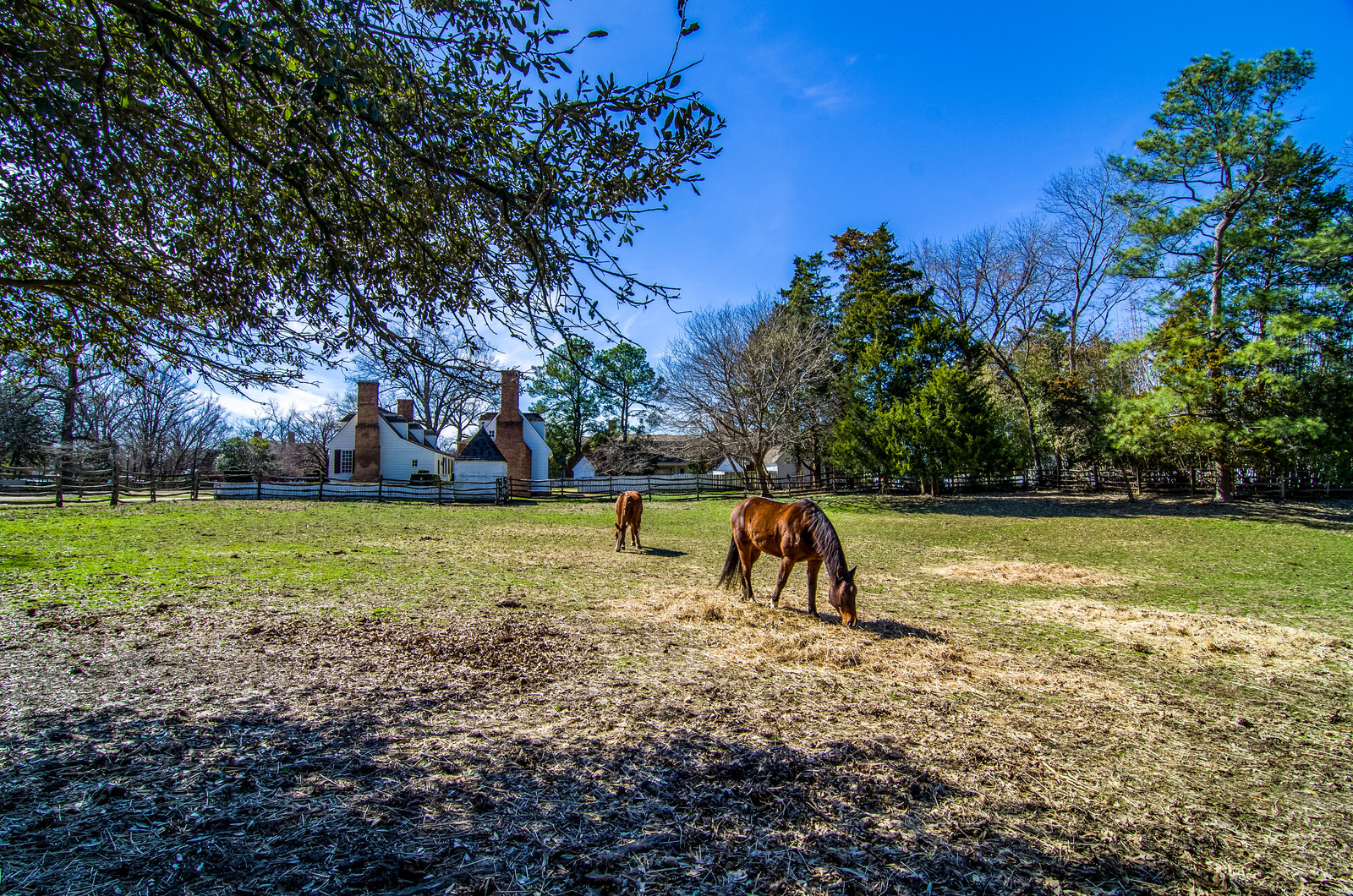 Farmhouse surrounded by nearby trees with split rail fence and two brown horses grazing in the yard
