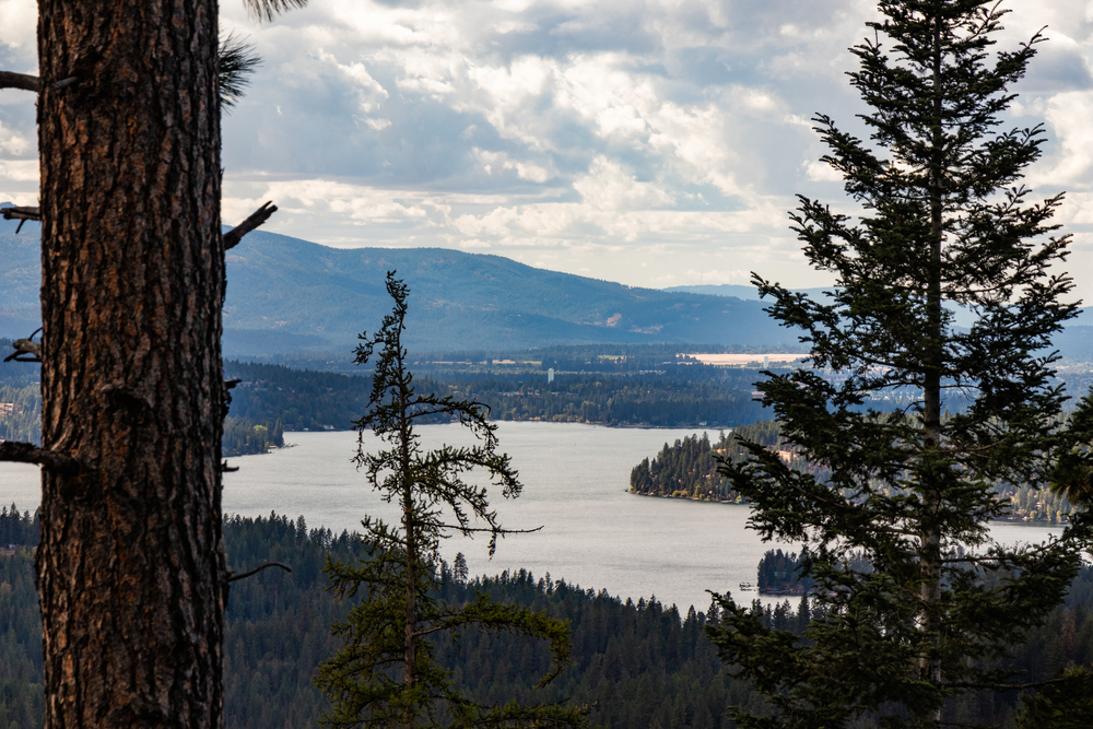 View through the trees at Hayden Lake on a cloudy day, showing two large trees and the lake