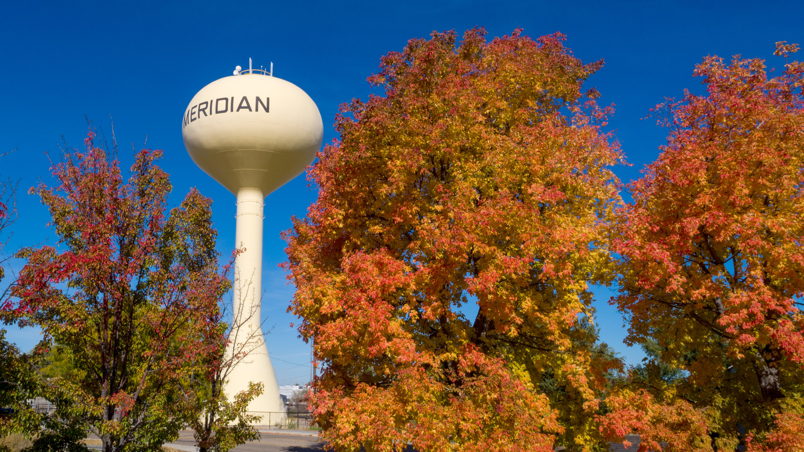 Red and yellow leaves in the fall with the Meridian Water tower in the background
