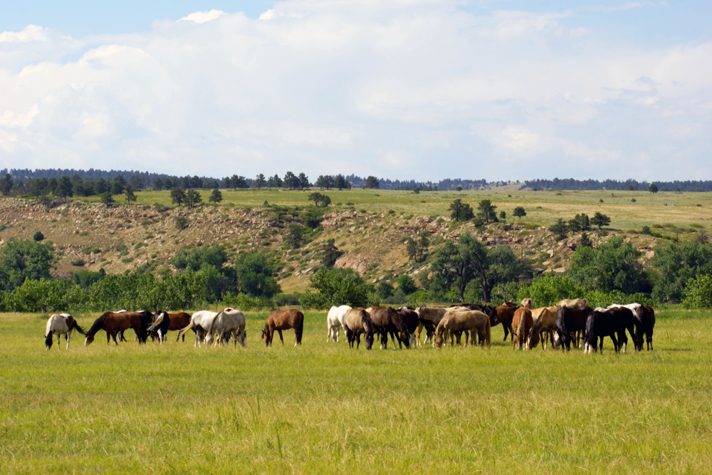 A scenic image of a horse sanctuary in Hot Springs South Dakota