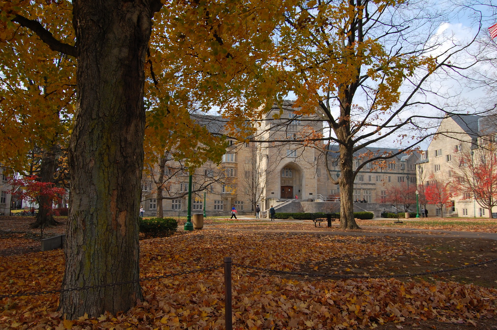 Indiana University Bloomington Campus in the fall with gold leaves littering the ground.