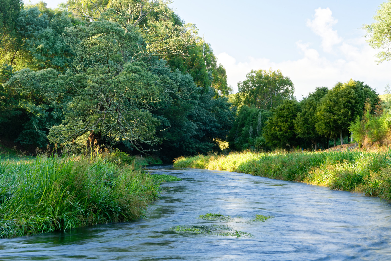 River with green grass edging the water and green trees in the background with blue skies and white puffy clouds