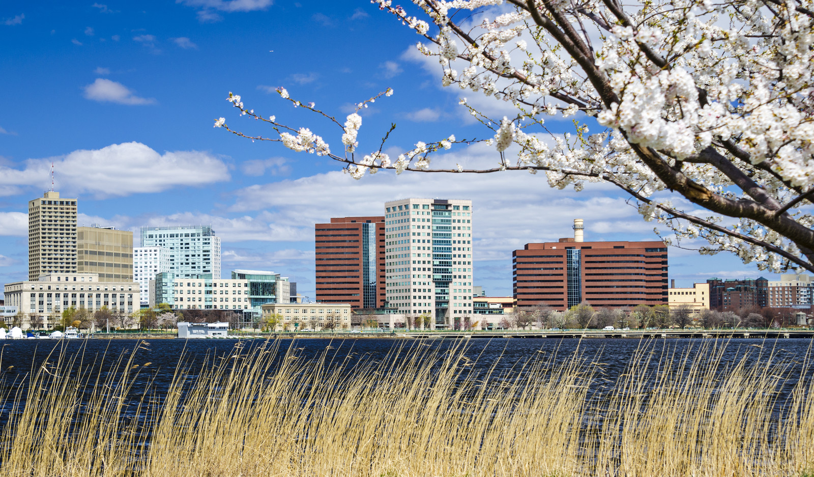 Cambridge, Massachusetts skyline in the spring, photo taken on the other side of the Charles River near a cherry blossom tree in early spring