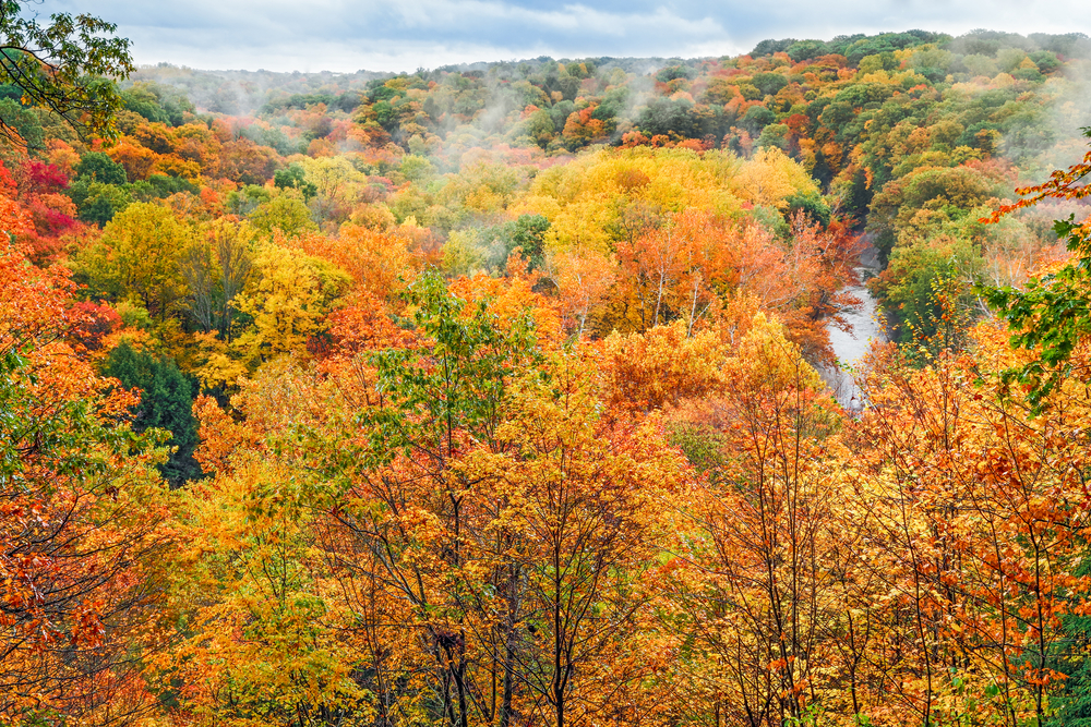Fall colors in the Cuyahoga Valley National Park in Ohio looking over a large number of trees