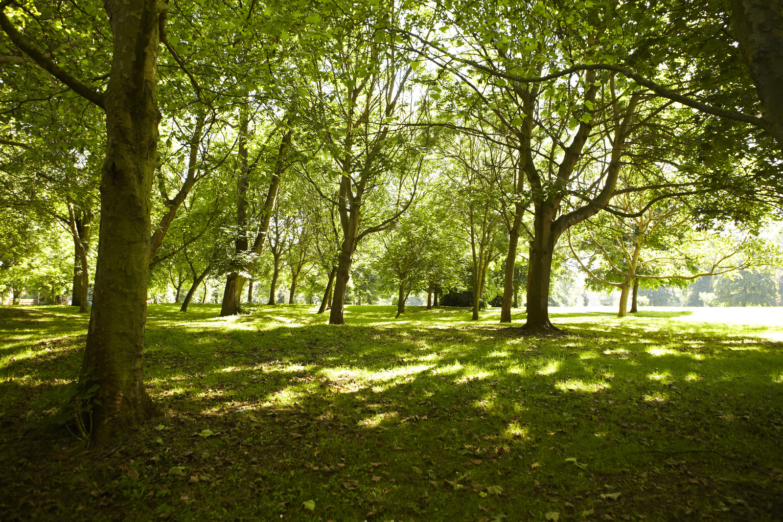 View of Abington Park full of green trees on a sunny day in Northampton