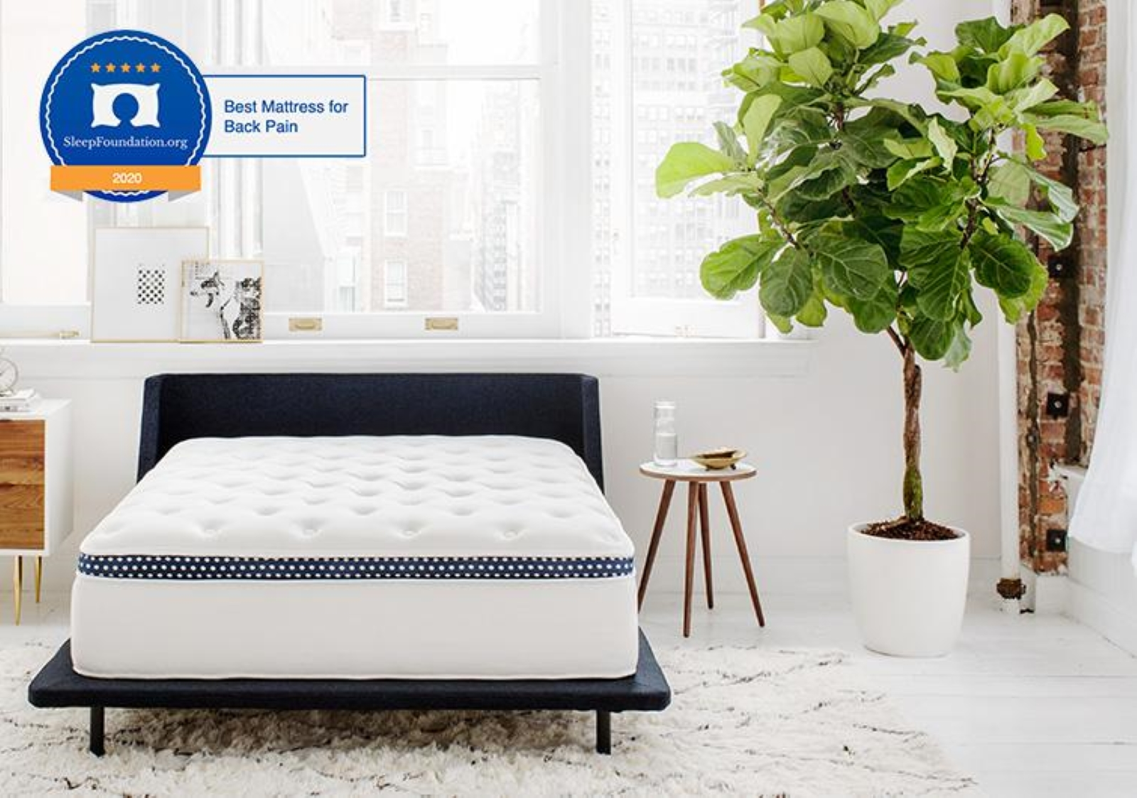 Wink Bed mattress on a dark bed frame in a room with a primarily white background with a tree in the corner and photos above the bed in front of the window