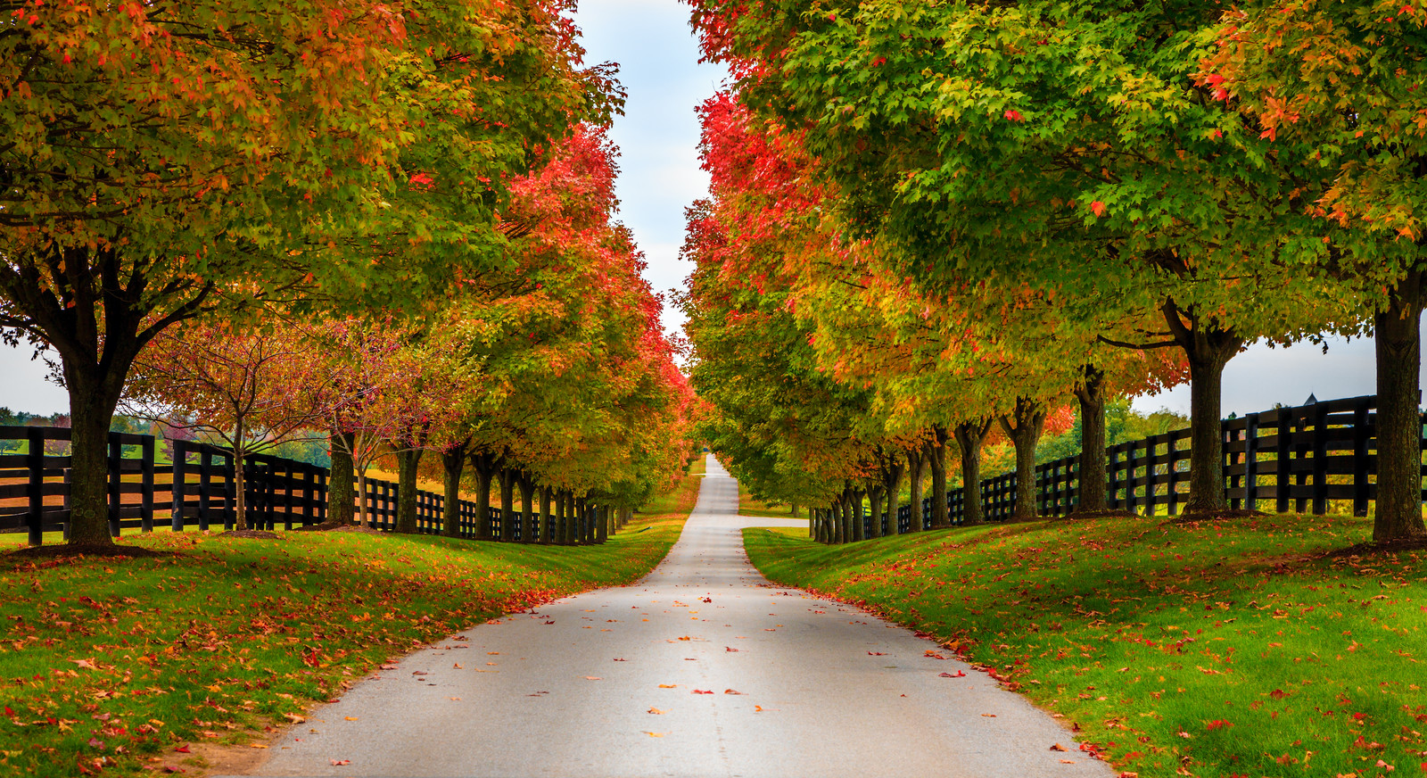 Top 5 Places To Retire in Kentucky - Empty black topped road between horse farms with trees turning colors in early fall, dark green grass, and dark brown fence lining the road