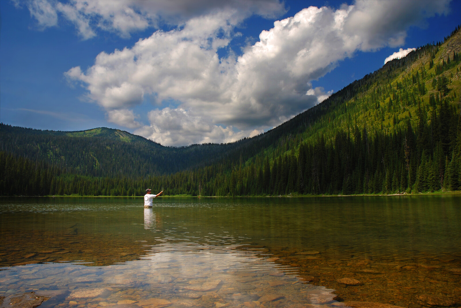 Man fly fishing in a clear lake on a blue day with white puffy clouds surrounded by hills covered in pines