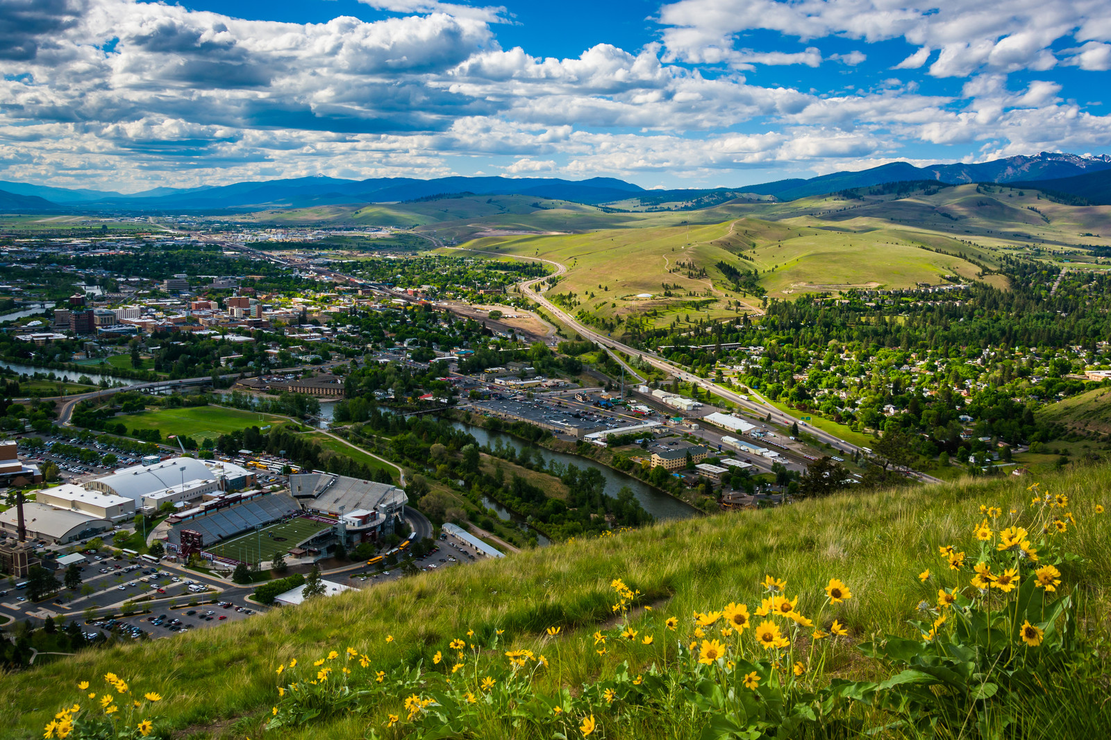 Sunny day photo from Mount Sentinel surrounded by yellow daisy-like flowers looking down on Missoula